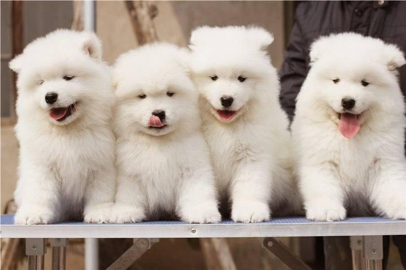 Top 10 shop thú cưng TPHCM uy tín nhất 1