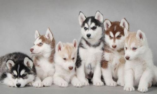 Top 11 shop thú cưng TPHCM uy tín nhất