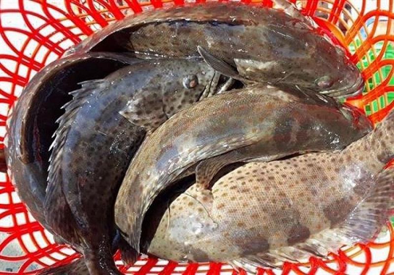 Làm sạch cá trước khi sơ chế bạn nhé