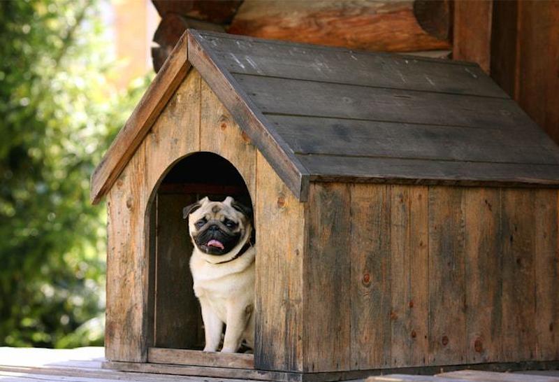 Một số lưu ý khi sử dụng chuồng chó