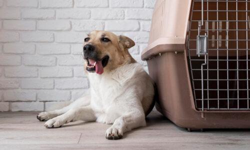Top 5 chuồng chó tốt nhất 2021