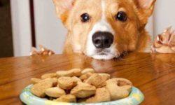 """Top 5 loại thức ăn cho chó tốt cho """"cún cưng"""" nhà bạn 64"""