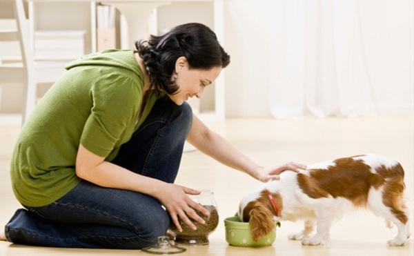Tại sao nên sử dụng thức ăn riêng cho chó