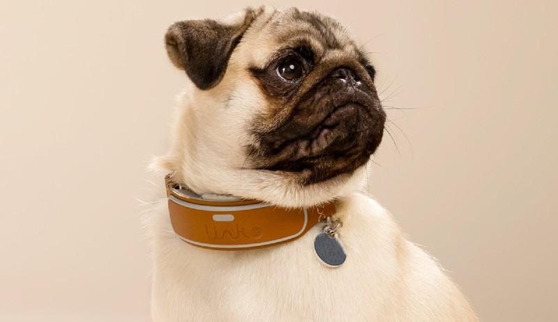 Đeo vòng cổ cho chó có nhiều cái lợi