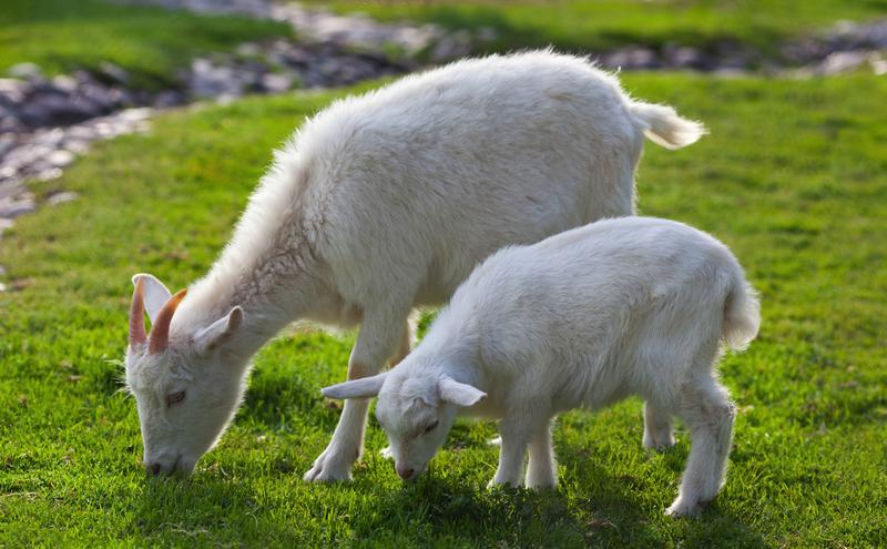 Lông cọ tự nhiên thường được làm từ lông của các loài động vật
