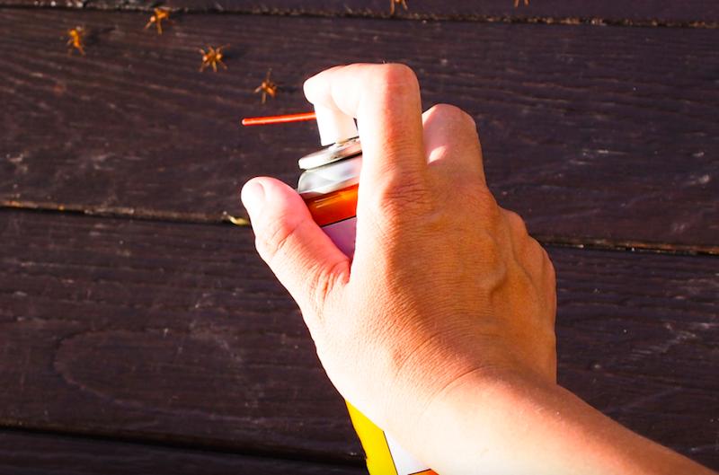 Thuốc diệt kiến có độc cho người dùng
