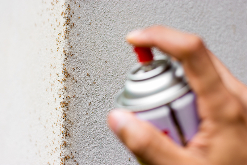 Thuốc diệt kiến là gì