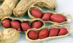 Lạc là một loại đậu rất tốt cho sức khỏe