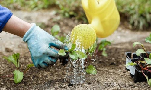 Top 5 găng tay làm vườn tốt nhất dành cho các nhà nông chính hiệu 9