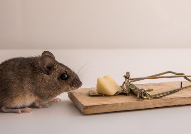 Chọn chức năng chính của bẫy dính chuột