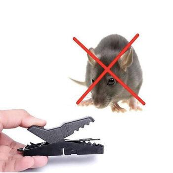 Kẹp bẫy chuột thông minh
