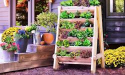 5 shop bán hạt giống, cây trồng, phân bón, đồ làm vườn/ ngoài trời